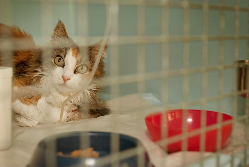 assistente veterinaria, assistente veterinario, fotografia, corsi, comunicazione visiva, cv, reportage